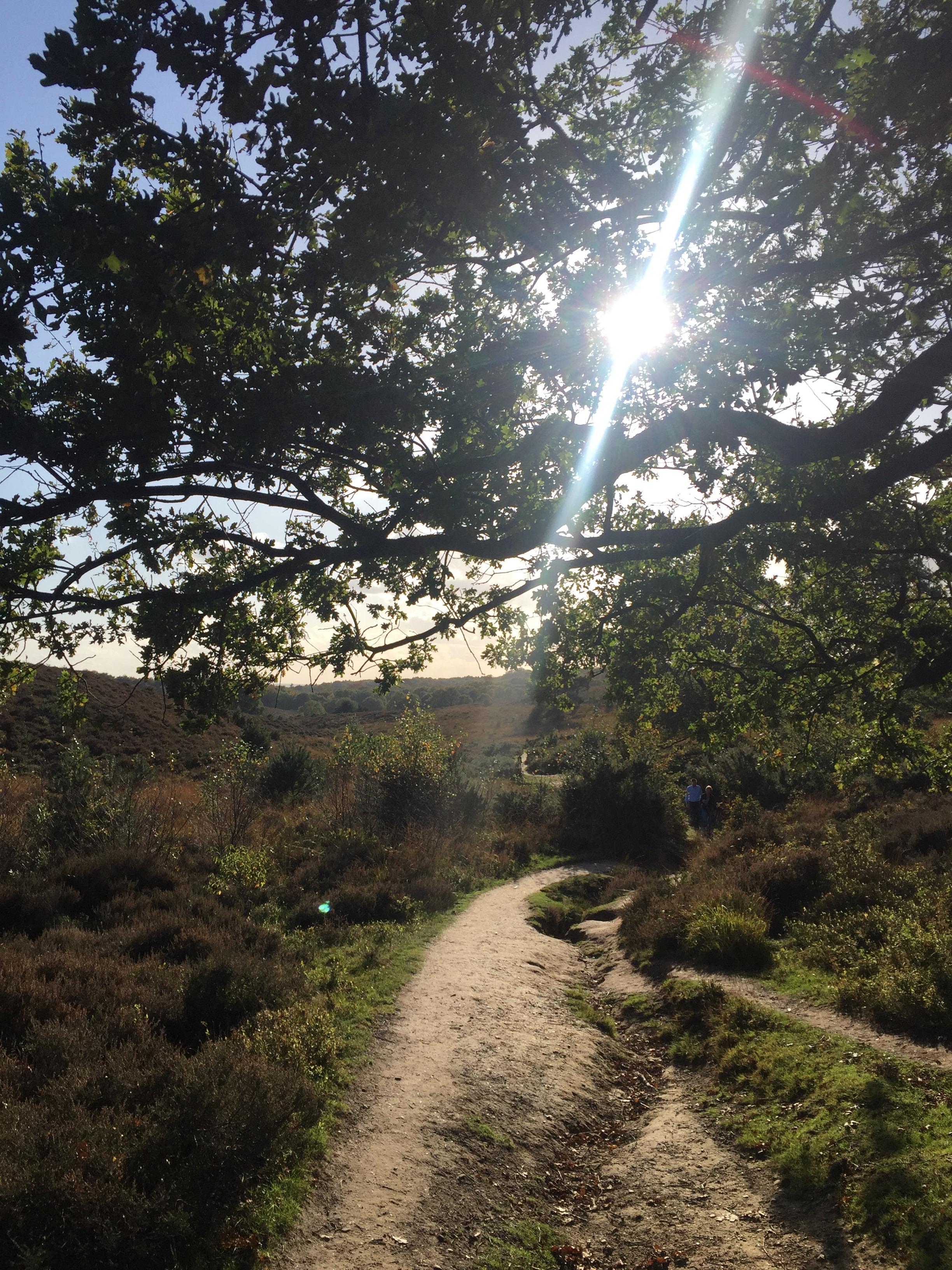 Wandelroute: Veluwezoom – Posbank